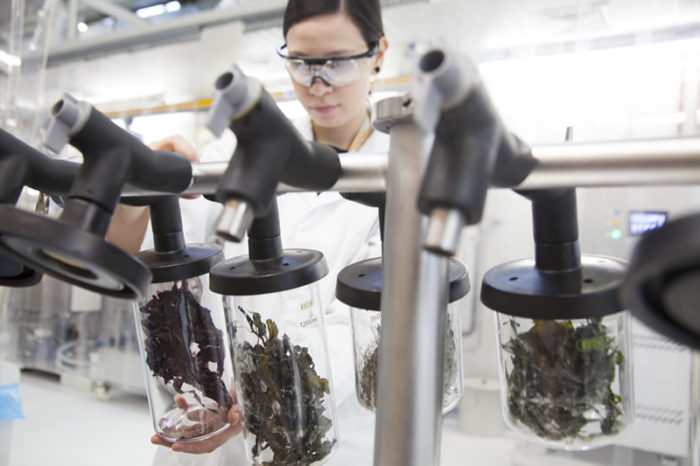World premiere: Dutch lab makes biofuel out of seaweed